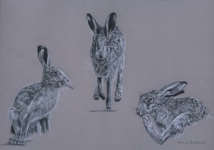 Hares merged_edited-1